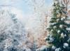 christmas-season-blog_edited-1