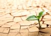 how-to-flourish-in-difficult-circumstances-blog_edited-1