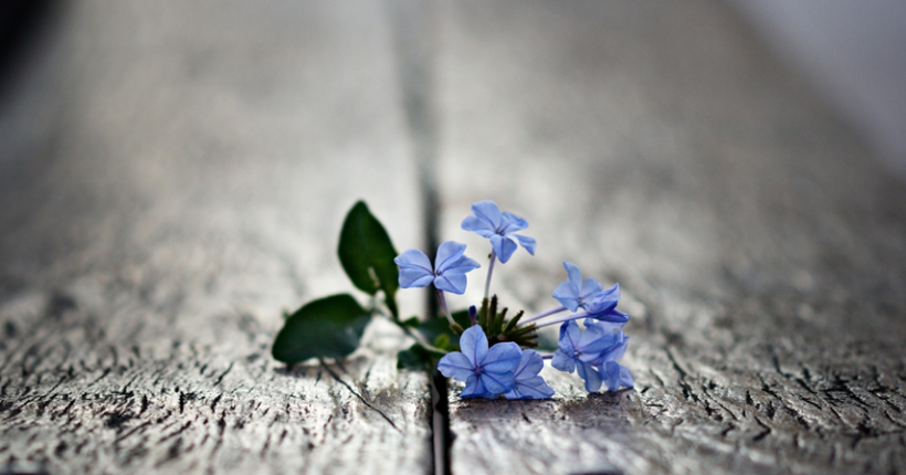 flourishing-in-the-cracks-blog_edited-1